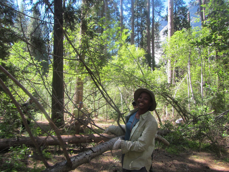 Senam carries a tree limb in Yosemite National Park.
