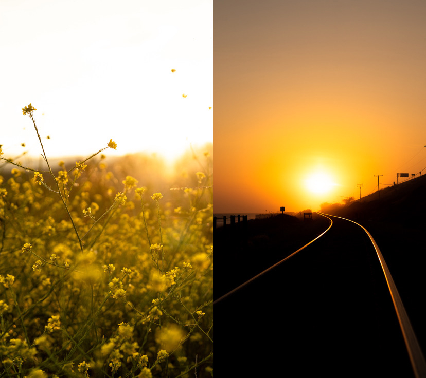 Photos of flowers and a sunrise.