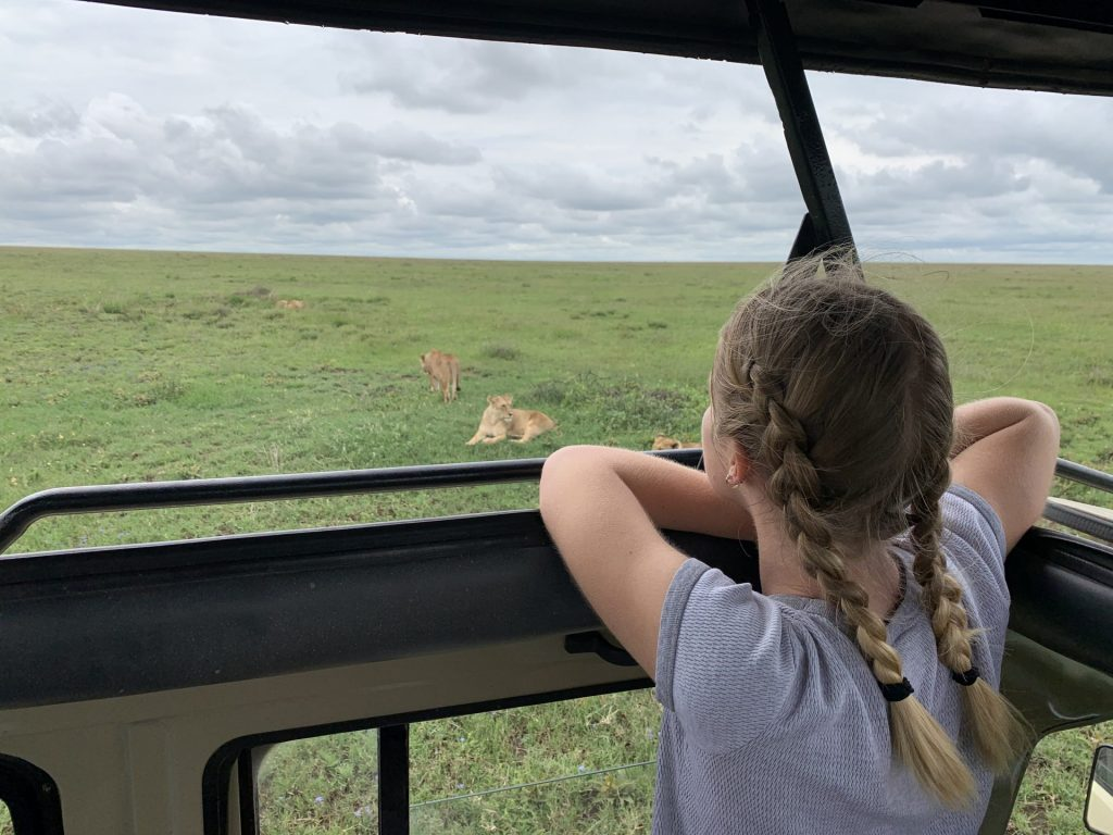 A person looks out at lions and other wildlife during a safari ride.