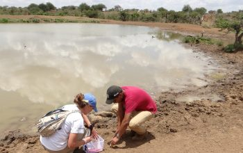 Georgia Titcomb '14 and Ivan Rodríguez test water samples from a reservoir used by wildlife and cattle in central Kenya.
